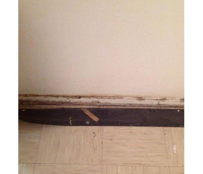 Water and Mold Remediation in Washington, DC