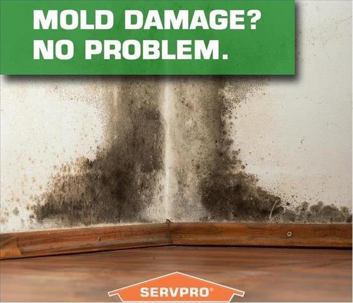 Mold Remediation Preventing Mold in the Summer Months