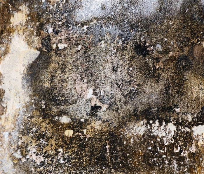 How To Tell If It S Black Mold