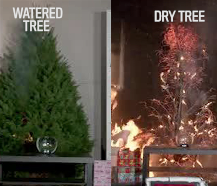 Fire Damage Christmas Tree Fires: 5 Simple Tips to Avoid Danger